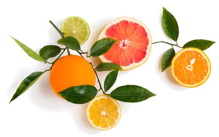 CITRICOS: Vista superior de la rama de árbol de cítricos con frutas de lima, limón, pomelo y naranja aisladas sobre fondo blanco.