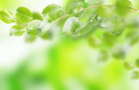Green leaves on the spring blurred  background.  Nature concept. Stok Fotoğraf