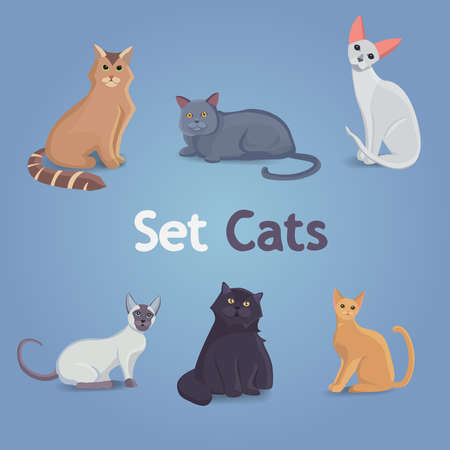 big cat: Collection of Cats and Dogs of Different Breeds. Vector Illustration Set.