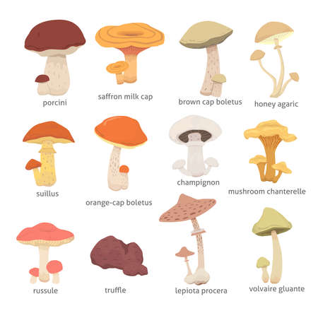 différents types de champignons. définir champignons illustration vectorielle Vecteurs