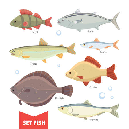 sturgeon: Freshwater fishes collection isolated on white background. Set Fish vector illustration. Illustration