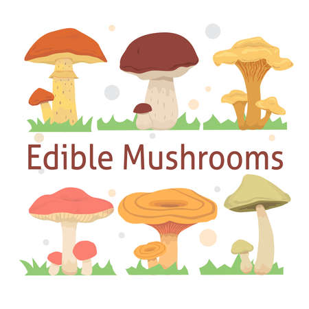 edible: set edible mushrooms vector illustration