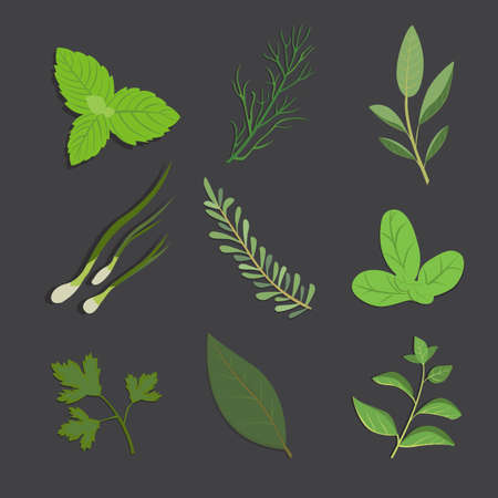 basil herb: Set of drawing herbs and flowers, vector. Isolated herbs and spices.