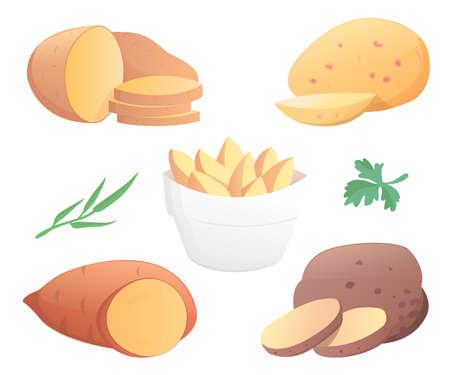 Potatoes vector illustration. Isolated potato