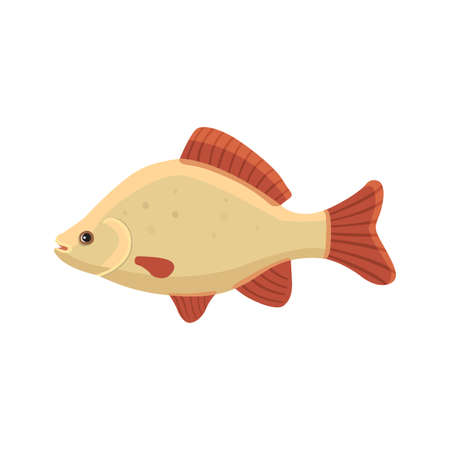 common carp: crucian carp vector illustration isolated
