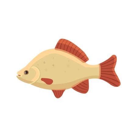 crucian carp vector illustration isolated
