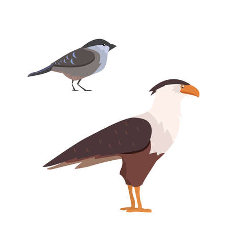 Popular birding species flat collection Illustration