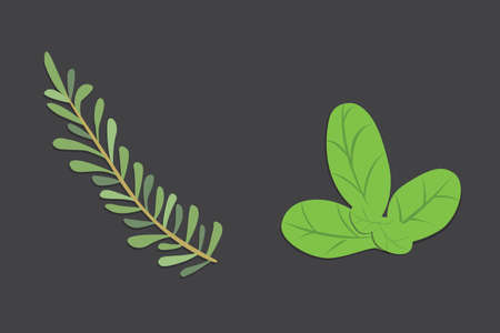 oregano: Aromatic herbs set. Fresh herbs and spices set. Vector isolated illustration.