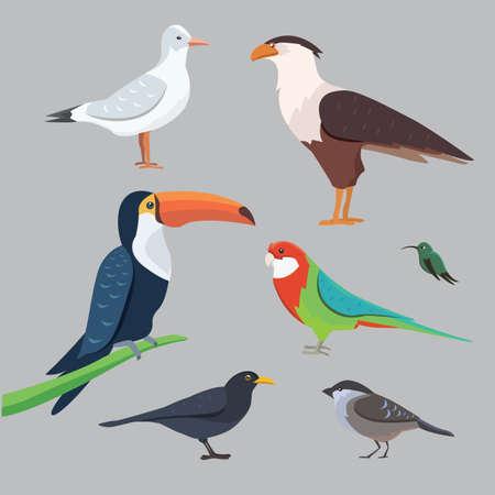species: Popular birding species collection Illustration
