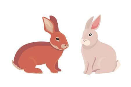 rabbit standing: vector illustration of cartoon rabbits different breeds. Fine bunnys for veterinary design Stock Photo