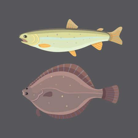 shark catfish: Isolated river fish. Set of freshwater sea cartoon fishes. Fauna ocean vector illustration Illustration