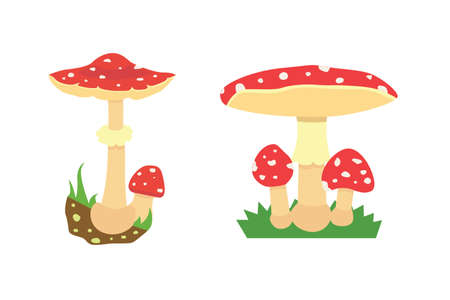 fly agaric: Amanita poisonous mushroom, isolated vector on white