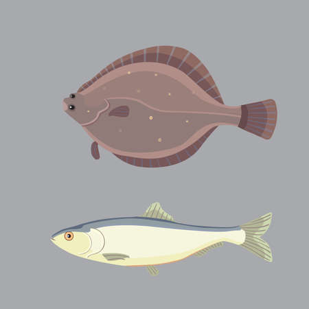 Isolated river fish. Set of freshwater sea cartoon fishes. Fauna ocean vector illustration Illustration