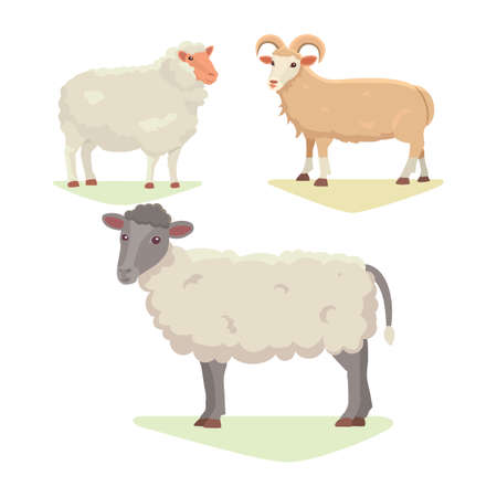 Vector set Cute Sheep and Ram isolated retro illustration. Standing Sheeps silhouette on white. Farm fanny milk young animals Illustration