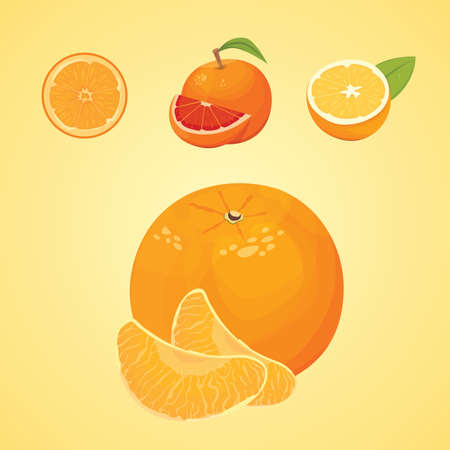 Vector collection of fresh ripe oranges and tangerines with leaves. vector orange.