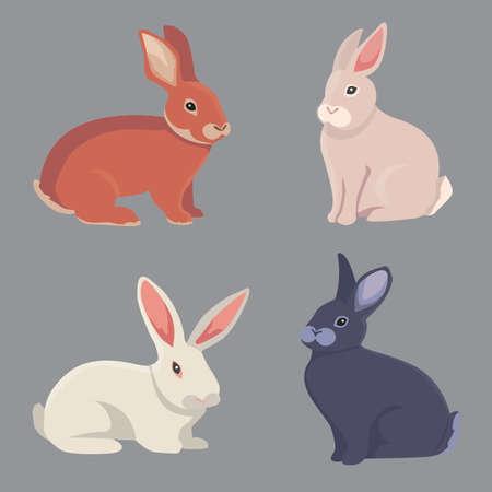 Illustration vectorielle de lapins de bande dessinée différents de races. bunnys Beaux pour la conception vétérinaire Banque d'images - 80052562