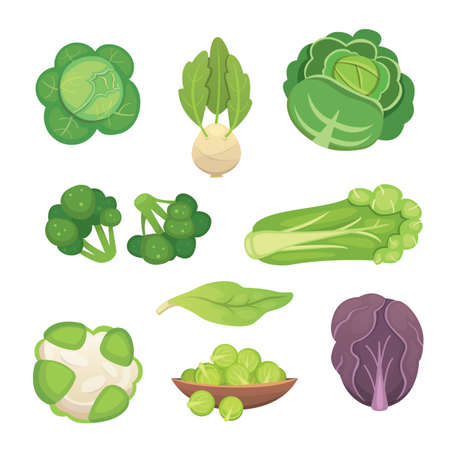 kale: Vegetable set with broccoli, kohlrabi and other different cabbages