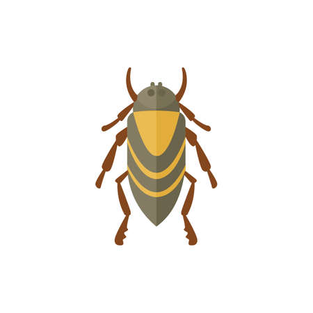 ladybird: insect flat style vector design icons. Nature beetle cartoon illustration Illustration
