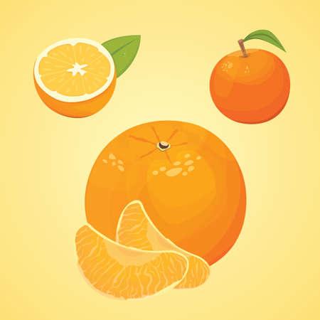 Vector collectie van verse rijpe sinaasappels en mandarijnen met bladeren. vector oranje.