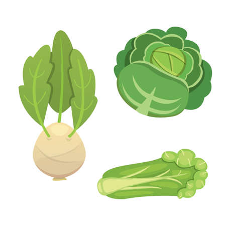 Set vector Cabbage and Lettuce. Vegetable green kohlrabi, other different cabbages. Illustration
