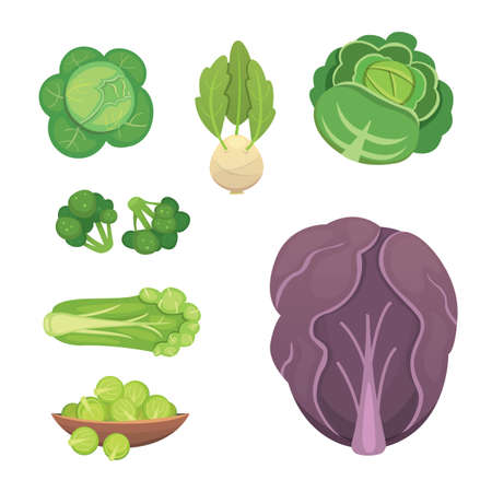 Set vector Cabbage and Lettuce. Vegetable green broccoli, kohlrabi, other different cabbages.