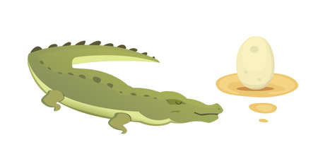 child sitting: Crocodile Cute Character set. Aligator vector cartoon isolated illustration