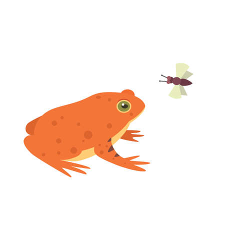 Red Frog Cartoon Vector Illustration isolated. tropical animal