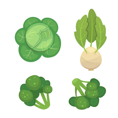 kale: Set vector Cabbage and Lettuce. Vegetable green broccoli, kohlrabi, other different cabbages.