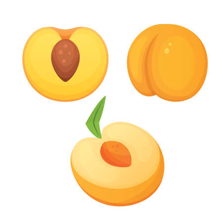 Collection of isolated cut and whole vector peaches. Vector apricot illustration in cartoon style.