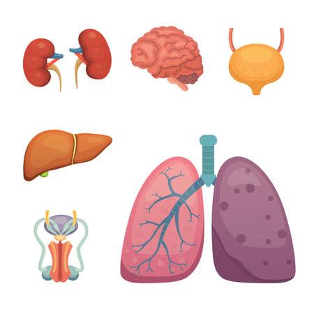 Cartoon human organs set. Anatomy of body. Illustration