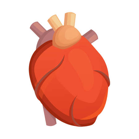 Heart medical science vector illustration flat. human anatomy. Illustration
