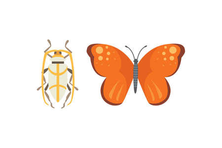 Set of different insects in cartoon style. Butterfly and beetle.