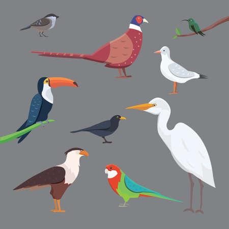Ensemble isolé de collection d'oiseaux populaire plat Banque d'images - 89170350