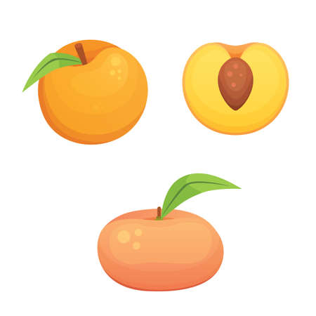 Collection of apricot fruit.