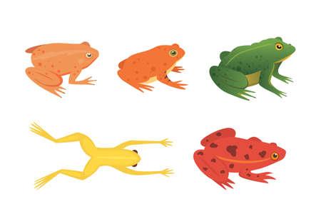 Exotisches Amphibien-Set. Frösche in den verschiedenen Arten Karikatur-Vektor-Illustration lokalisiert. tropische Tiere