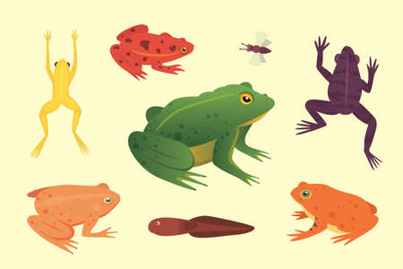 Exotic amphibian set. Frogs in different styles. Cartoon vector illustration isolated. Tropical animals Illustration