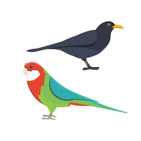 Popular birding species collection isolated illustration.