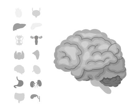 Cartoon human organs vector set, anatomy of body. Reproductive system, heart, lungs, brain illustrations. Illustration