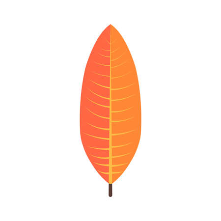 Tropical leaves floral icon. Autumn wood and exotic leaf decoration for botanical background