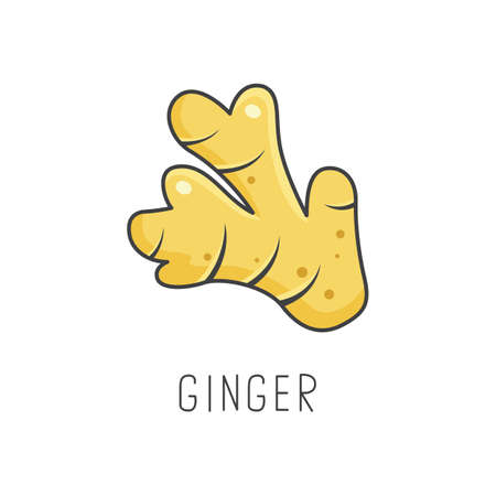 Ginger line vector illustration, cooking isolated icon.  イラスト・ベクター素材