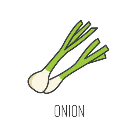 onion line vector illustration, cooking isolated icon. Illustration