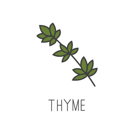 thyme line vector illustration, cooking isolated icon. Иллюстрация