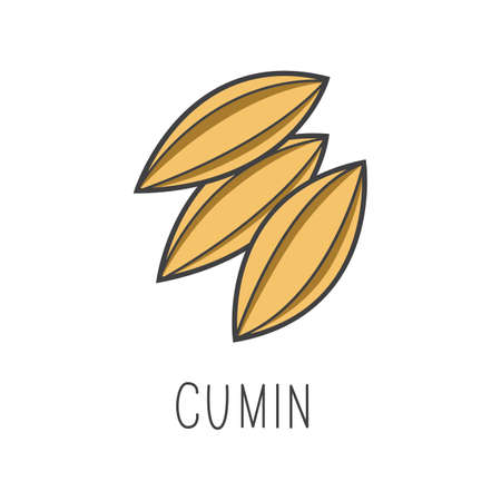 cumin line vector illustration, cooking isolated icon.