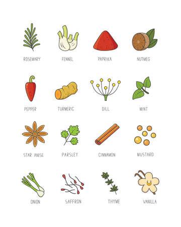 Kulinarische Gewürze und Kräuter für Ihre Menü- oder Küchengestaltung. Gewürzkollektion im linearen Stil