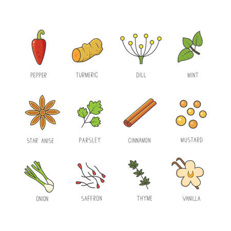 Vector set of culinary spices and herb for your menu or kitchen design. Condiments collection in line art style