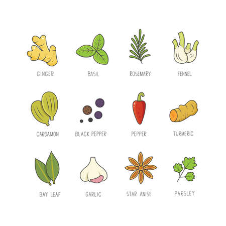 Set of culinary spices and herb for your menu or kitchen design. Condiments collection herbs in linear style Stock Illustratie