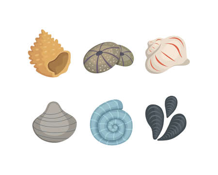 Sea shell vector icons in cartoon style. Set of clam mollusc. Ocean cockleshell. 向量圖像