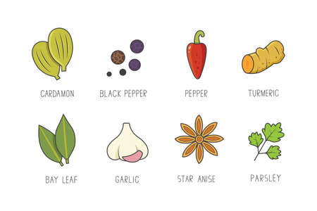 Vector set of culinary spices and herb for your menu or kitchen design Illustration