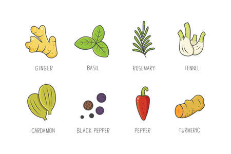 Set of culinary spices and herb for your menu or kitchen design. Condiments collection herbs in linear style Illustration