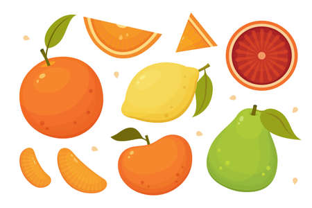 Citrus fruits slices, whole and halves. Orange, grapefruit, lemon, pomelo isolated vector icons. Tropical fruits set